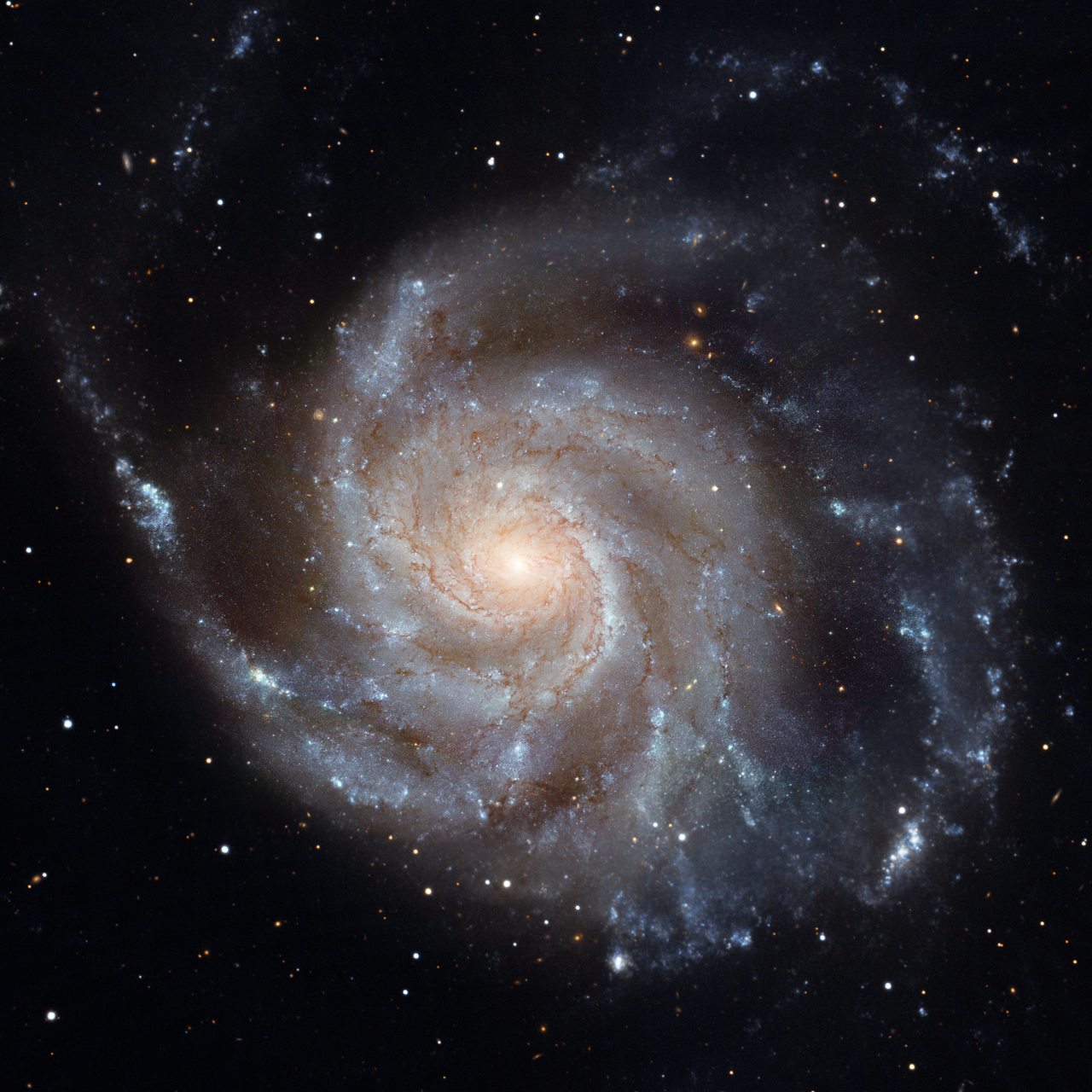 An image of Messier 101, the Pinwheel Galaxy, made with the Hubble Space Telescope. The bright blue clumps in the spiral arms are sites of recent star formation.